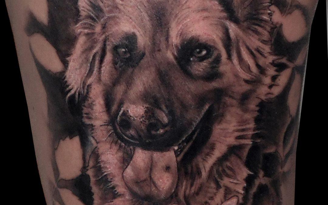 Tatuajes perros Mascotattoo Promoción